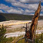 Old Faithful Geyser Basin by Matthew Barrett