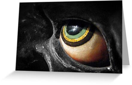 The Eye by Ellen Cotton