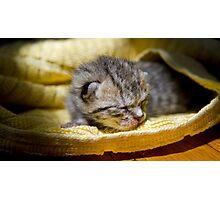 Newborn Kitten Photographic Print