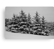 Frosted Trees Canvas Print