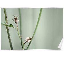 Flower stem closeup Poster