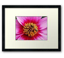 Bee 2 Framed Print