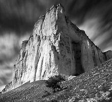 Lonely tree and White rock by yurybird