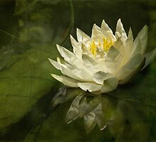 Lily's green world by Celeste Mookherjee