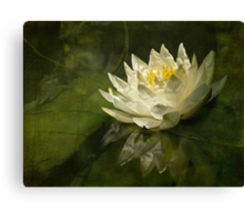 Lily's green world Canvas Print
