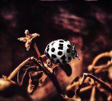 ladybug by © Karin  Taylor