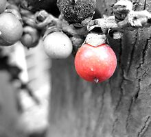 Colour Splash - Red Seed by Kelly Walker