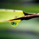 Drop Reflection by Damon Colbeck
