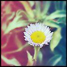 Little wildflower  by Lynn Starner