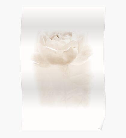 Misty Rose Poster