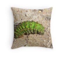 Emperor Moth Caterpillar ,   Saturnia pavonia Throw Pillow