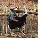 Ostrich Riding - Oudtshoorn, South Africa by Bev Pascoe