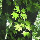 Poet-Tree by Quinn Blackburn