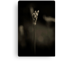 Chives in monochrome Canvas Print