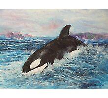 ORCA KILLER WHALE 2 Photographic Print