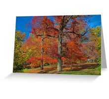 Red Tree. Greeting Card