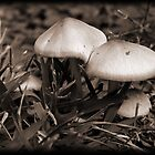 Toadstools by Otto Danby II