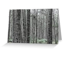 Haiti National Forest Greeting Card