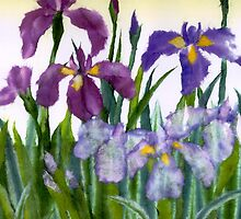 Irises by Lily Nakao