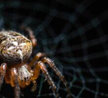 Spider on the Web  Sticker