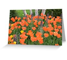 Orange Tulip Garden Greeting Card