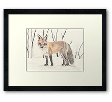 Colored pencil Fox Framed Print