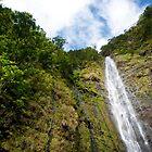 Waimoku Falls by Shannon Kerr