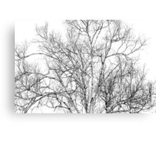 Spring Birch Canvas Print