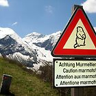 Warning Marmot! by Gordon Nightingale