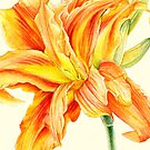 Double Daylily Hemerocallis orange watercolor by Sarah Trett