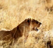 Stalking prey Sticker
