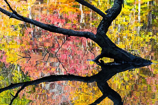 Sunken Log and Autumn Reflection by Kenneth Keifer