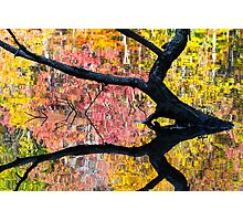 Sunken Log and Autumn Reflection Photographic Print