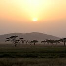 Sunset on the Serengeti by David McGilchrist