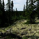 Caribou moss by AndreCosto