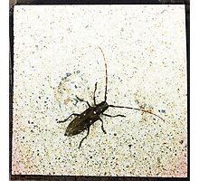 Beetle Photograph Photographic Print