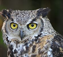 The look of wisdom by Heather King