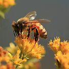 """""""Will You Bee My Honey ? """" by Renee Blake"""