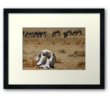 Reality of the Serengeti Framed Print