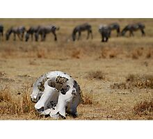 Reality of the Serengeti Photographic Print
