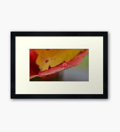 rain drop Framed Print
