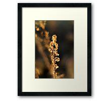 Light flower 2 Framed Print
