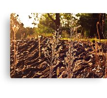 A grassy sunset Canvas Print
