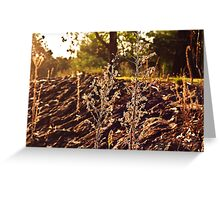 A grassy sunset Greeting Card