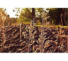 A grassy sunset Photographic Print