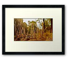 A grassy sunset 2 Framed Print