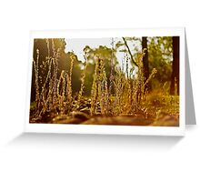 A grassy sunset 2 Greeting Card