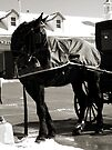 Don't Forget to Park Your Horse (black and white) by Nevermind the Camera Photography