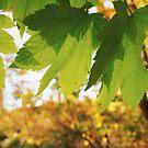 Leaf Autumn by Eliza Sarobhasa