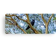 Crowing loudly Canvas Print